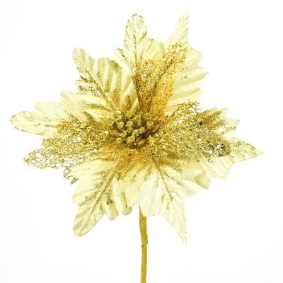 Poinsetie třpytivá - zlatá