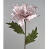 Poinsetie růžová