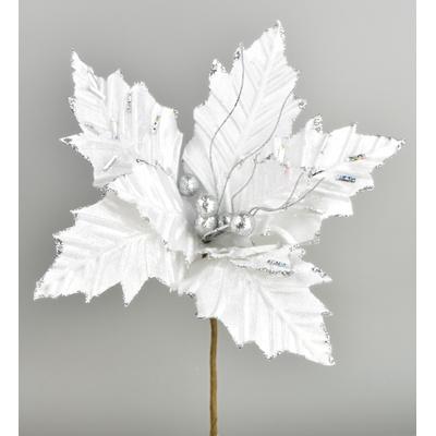 Poinsetie třpytivá - bílá