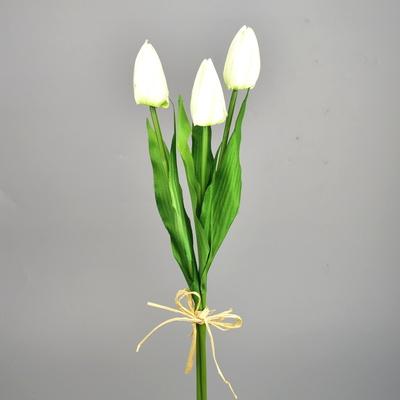 Svazek 3 ks tulipánů krémové