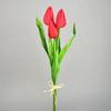 Svazek 3 ks tulipánů červené
